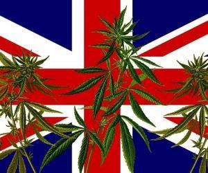 Union Jack with Marijuana Plant